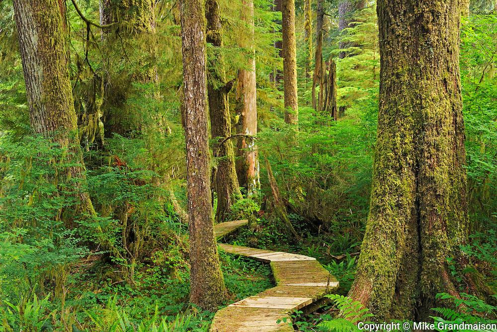 Boardwalk in coastal temperate rain forest<br /> <br /> Carmanah-Walbran Provincial Park<br /> British Columbia<br /> Canada