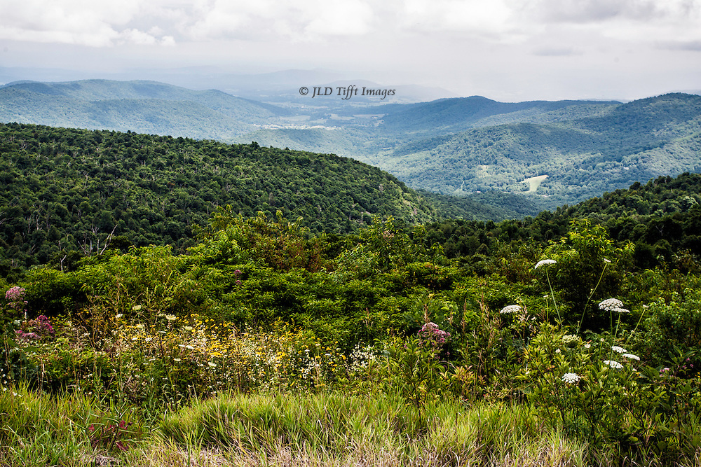 Scenic view from the Skyline Drive in Virginia