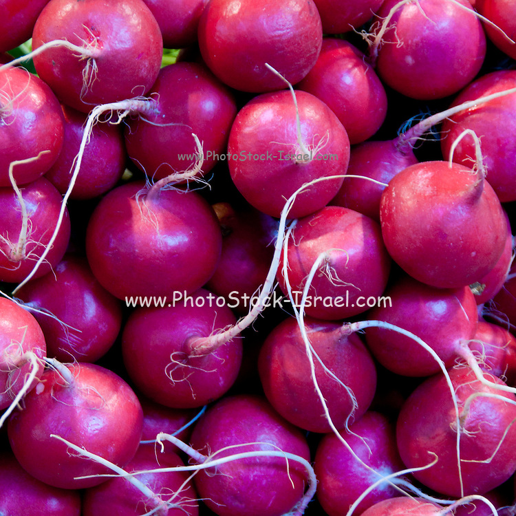 Radishes at a Market Stall Photographed in Budapest, Hungary