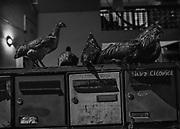 Saint-Georges de l'Oyapock, Guyane, 2015.<br /> <br /> Saint-Georges est historiquement un des gros points de passage de l&rsquo;immigration entre la Guyane et le Br&eacute;sil. On y compte beaucoup de familles binationales. Sa population est essentiellement compos&eacute;e de cr&eacute;oles, d&rsquo;am&eacute;rindiens, de br&eacute;siliens et de fonctionnaires m&eacute;tropolitains de l&rsquo;&eacute;ducation nationale. Les deux supermarch&eacute;s sont tenus par des commer&ccedil;ants d&rsquo;origine chinoise, comme souvent en Guyane.