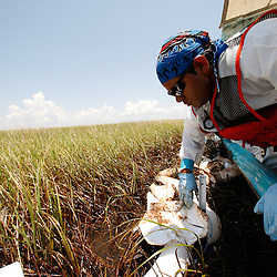 A BP contract worker uses absorbent pads to wipe oil off of grass impacted by oil in the marshlands outside of Cocodrie, Louisiana, U.S., on Tuesday, June 1, 2010. The BP Plc Deepwater Horizon drilling rig that exploded and collapsed into the Gulf of Mexico continues to release thousands of barrels of oil into the gulf as cleanup and containment efforts continue all along the gulf coast. Natural wildlife habitats, marine life and the area seafood industry is threatened by oil that is now reaching coastal areas throughout Louisiana. Photographer: Derick E. Hingle