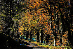 Sunshine on trees in autumn colour in the Scottish Borders<br /> <br /> (c) Andrew Wilson | Edinburgh Elite media