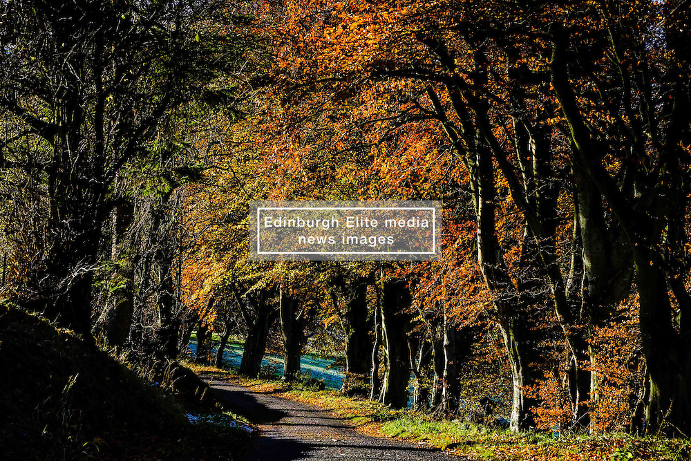 Sunshine on trees in autumn colour in the Scottish Borders<br /> <br /> (c) Andrew Wilson | Edinburgh Elite media