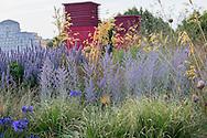 Pennisetum alopecuroides 'Red Head', agapanthus, Agastache 'Blue Fortune', Perovskia 'Blue Spire', Stipa gigantea