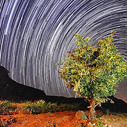 Star Trail, around the tree, Sahyadri, India.