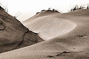 Curved sepia toned sand dune at Jockeys Ridge State Park on the Outer Banks of NC.