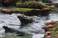galapagos-animals