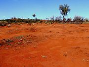 thorny devil (moloch horridus)wide shot, Uluru national park, northern territory