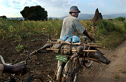 A Malawian trader carries a pig on the back of his bike through the village of Makhwata in Malawi, July 1, 2002.  Because of the droughts and flooding in the last year, most Malawians were unable to buy seeds to grow their own food and are suffering from malnutrition because of the ongoing food shortage in the region. The World Food Program estimates that 3.2 million people in Malawi alone will be affected before March 2003.   (photo by Ami Vitale/Getty Images)