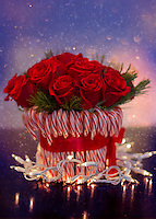 A fun floral centerpiece my wife had made for Christmas. Lush red roses frames by festive candy-canes , wrapped in Christmas lights.