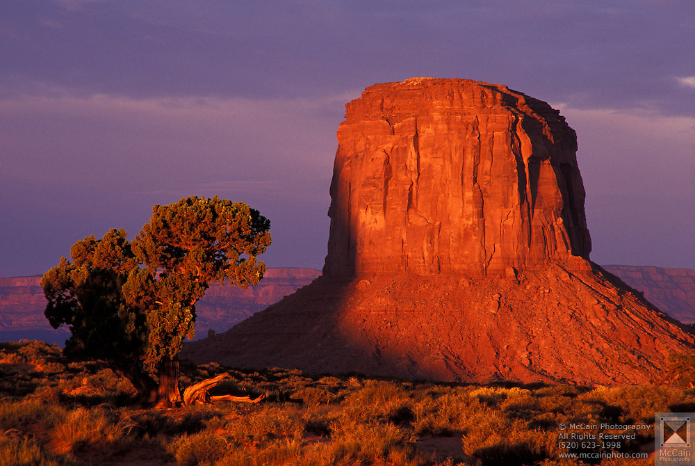 Mitchell Butte & Juniper tree at sunrise, Navajo Tribal Park, AZ