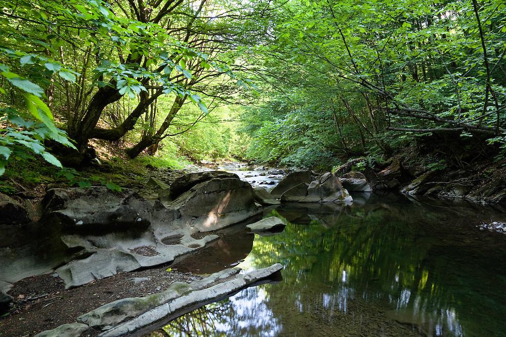 Cirocha Creek in Poloniny National park, Western Carpathians, Slovakia, Europe