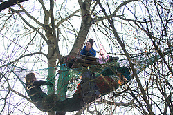 Harefield, UK. 20 January, 2020. Activists talk high in a tree at the Colne Valley wildlife protection camp. Extinction Rebellion, Stop HS2 and Save the Colne Valley had reoccupied the camp two days before as part of an ongoing attempt to protect ancient woodland threatened by the HS2 high-speed rail link after a small group of Stop HS2 activists had been evicted by bailiffs over the course of the previous two weeks. 108 ancient woodlands are set to be destroyed by the high-speed rail link.