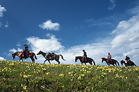 Trial Riders Climb a Ridge against a Blue Alberta Sky, with yellow wild flowers in foreground