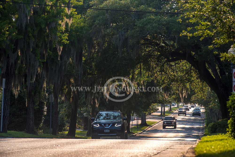 The late afternoon sun highlights the slow growing southern moss that hangs down Market Street among the canopy of Oak Trees that brings visitors to Wilmington's downtown hub.  Photo By:  Jeff Janowski