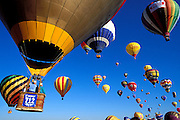 Hot air balloons rising in morning light at the International Balloon Fiesta, Albuquerque, New Mexico USA