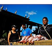 """Autor de la Obra: Aaron Sosa<br /> Título: """"Serie: Península de Paria""""<br /> Lugar: Río Caribe, Estado Sucre - Venezuela<br /> Año de Creación: 2009<br /> Técnica: Captura digital en RAW impresa en papel 100% algodón Ilford Galeríe Prestige Silk 310gsm<br /> Medidas de la fotografía: 33,3 x 22,3 cms<br /> Medidas del soporte: 45 x 35 cms<br /> Observaciones: Cada obra esta debidamente firmada e identificada con """"grafito – material libre de acidez"""" en la parte posterior. Tanto en la fotografía como en el soporte. La fotografía se fijó al cartón con esquineros libres de ácido para así evitar usar algún pegamento contaminante.<br /> <br /> Precio: Consultar<br /> Envios a nivel nacional  e internacional."""