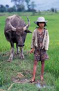 A Vietnamese girl tends her buffalo, near Hue.