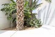 A fruit garden  at Kingdom of Bahrain pavilion in Expo 2015, Rho-Pero, Milan July 2015. There are ten fruit gardens in the pavilion, as how many fruit trees native to Bahrain. &copy; Carlo Cerchioli<br /> <br /> Un frutteto nel paglione del Bahrain a Expo 2015, Rho-Pero, Milano luglio 2015. Ci sono dieci frutteti quanti sono gli alberi da frutta originari del Bahrain.