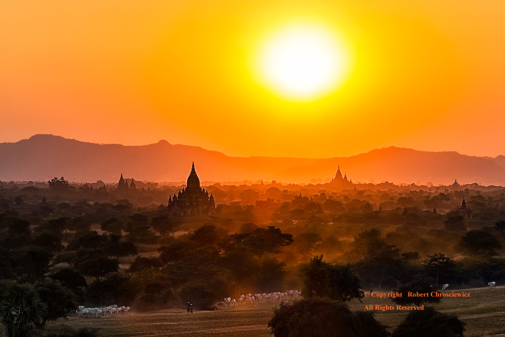 Under the fiery golden sunset, herdsmen guide their flock of goats through arid fields that are strewn with innumerable holy Buddhist temples and Stupas, Bagan Myanmar.