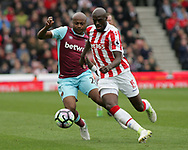 Bruno Martins Indi of Stoke City and Andre Ayew of West Ham United in action during the Premier League match at the Bet 365 Stadium, Stoke-on-Trent.<br /> Picture by Michael Sedgwick/Focus Images Ltd +44 7900 363072<br /> 29/04/2017