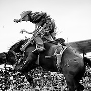 A cowboy realizes his ride is about to end.<br /> Augusta Rodeo 2011.