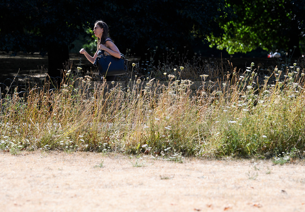 © Licensed to London News Pictures. 23/07/2018. London, UK. A  woman walks burnt and dry grounds in St James's Park central London, as the hot weather continues in the capital. Forecasters are predicting record temperatures this week. Photo credit: Ben Cawthra/LNP