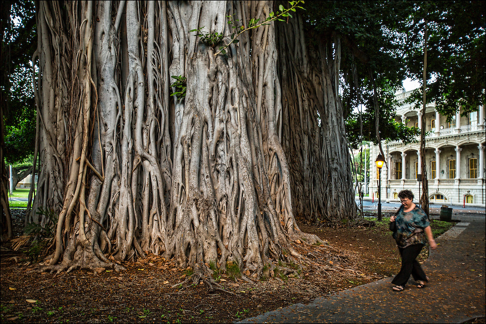 Early morning scene with banyan trees by Iolani Palace, Honolulu, HI ©PF Bentley