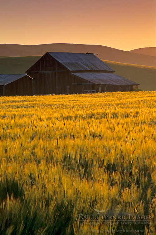 Golden sunrise light over barn and field in the Tassajara Region, Contra Costa County, California
