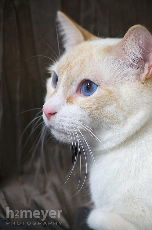 NWVS Employee's pets photo shoot Pet Portrait Photography