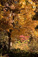 20081030 Autumn Gardens