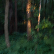 Evening light on the edge of the woods rendered with intentional camera movement.