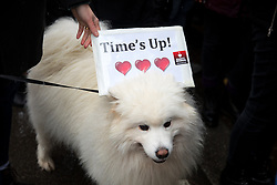 """© Licensed to London News Pictures. 21/01/2018. London, UK. Women campaign for gender equality at the """"Time's Up"""" rally, outside Downing Street. Photo credit : Tom Nicholson/LNP"""