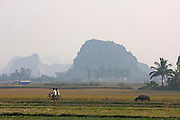Boys on bicycles crossing rice paddies.