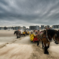 Paardenvissers, the last shrimpers on horseback.