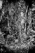 "Iwan, a Saamaka Maroon man, stands in front of a massive rainforest tree near Djumu, Suriname.  The Maroon people along the upper Suriname River are effective stewarts of the land they claimed centuries ago after fleeing their Dutch slave masters.  In 1762, the Saamaka signed a treaty with their Dutch colonial master affording them freedom, territory and autonomy.  In the landmark 2007 decision for ""Saamaka v Suriname"" at the Inter-American Court of Human Rights in Costa Rica, the court ""guaranteed territorial rights not just for Saamaka, but for all Maroons and indigenous people"" in Suriname. In Djumu, Boven Suriname (Upper Suriname River).  Suriname."