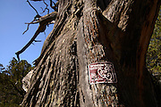 A dead tree has been designated as a Wildlife Tree by the U.S. Forest Service in the Santa Rita Mountains, Coronado National Forest, north of Sonoita, Arizona, USA.  A Wildlife Tree is to remain standing to host wildlife.