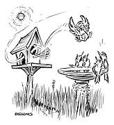 (A bird makes an acrobatic dive into a birdbath)