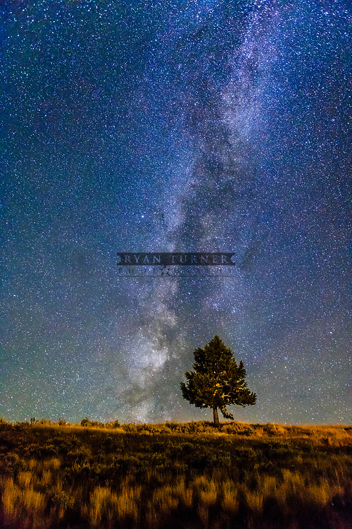 A tree stands alone in front of the night sky in Montana.  Limited Edition - 75