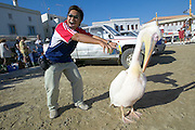 The famous pelicans at the harbour.