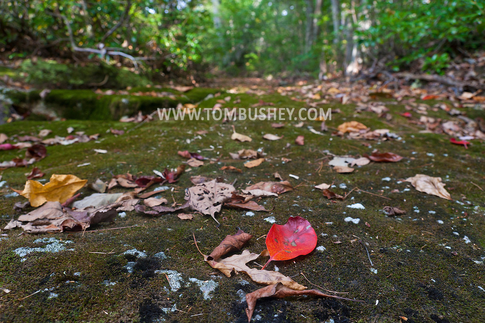 Kerhonkson, New York - Leaves on a dry stream bed at Minnewaska State Park during the Shawangunk Ridge Trail Run/Hike 32-mile race  on Sept. 20, 2014.