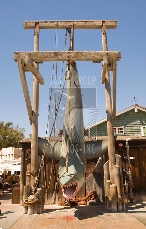 Great White shark hanging from a wooden scaffold in a fishing village