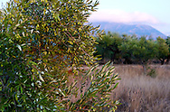 Grece, Peloponese, Aghios Nikolaos, Magne