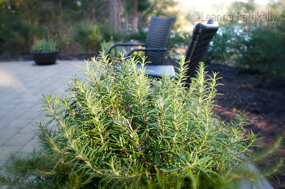 Rosemary bushes rim a deck of a home set in a forested hillside overlooking a BC Ferries water route.