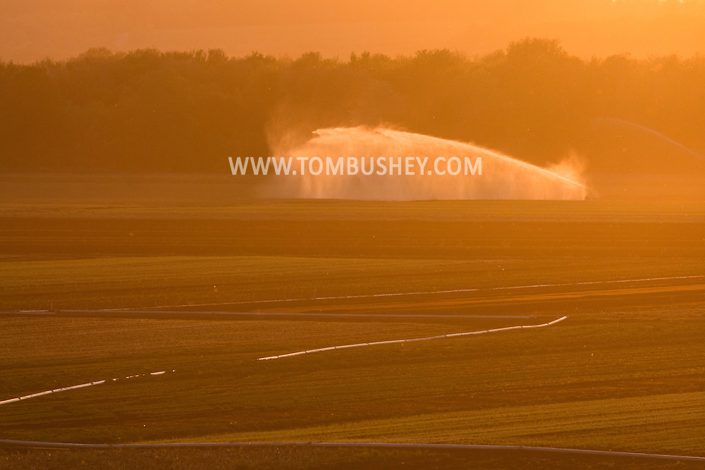 Irrigation water sprays on a Black Dirt field in Goshen, New York, at sunset. The spring has been very dry so far in Orange County.