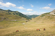 Horses grazing above Dobërdol summer pasture on the Peaks of the Balkans trail, Albania © Rudolf Abraham