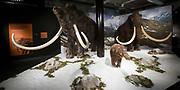 Nieuwe expositie in de Amsterdam Expo - Giants of the Ice Age de grootste reizende tentoonstelling over de ijstijd ooit.<br /> <br /> Op de foto:  De tentoonstelling De tentoonstellingsruimte met o.a. uitgestorven zoogdieren