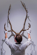 SHERRIE LEVINE, CARIBOU SKULL, Estimate £400,000-600,000  - Highlights From London's Flagship Sales of Impressionist, Modern, Surrealist & Contemporary Art at Sotheby's London.