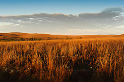 Prairie grasses and wildflowers are bathed in early light of a fall sunrise at the Tallgrass Prairie National Preserve. The 10,894-acre Tallgrass Prairie National Preserve is located in the Flint Hills of Kansas in Chase County near the towns of Strong City and Cottonwood Falls. Less than four percent of the original 140 million acres of tallgrass prairie remains in North America. Most of the remaining tallgrass prairie is in the Flint Hills in Kansas. Tallgrass Prairie National Preserve is the only unit of the National Park Service dedicated to the preservation of the tallgrass prairie ecosystem. The Tallgrass Prairie National Preserve is co-managed with The Nature Conservancy.