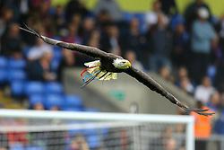 An eagle flys around Selhurst Park prior to kick off - Mandatory by-line: Jason Brown/JMP - 14/10/2017 - FOOTBALL - Selhurst Park - London, England - Crystal Palace v Chelsea - Premier League